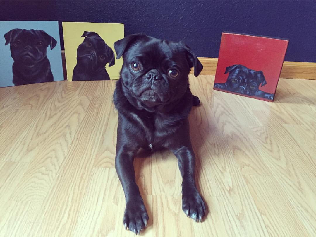 Alyson Kinkade testimonials from fine art collectors - Olive pictured with her portraits, happiness is a warm pug, pets in oil.