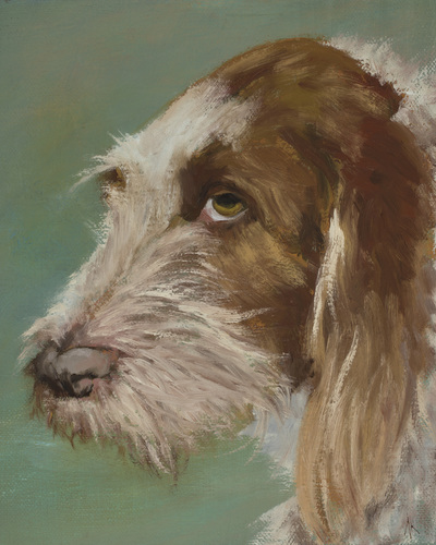 "Spinone Italiano, Happiness Is,  Dog, Art, Pet, Portrait, Fine Art, Oil, Painting, Custom, Commission Your Own, Happiness Is,   The ""Happiness is"" series title is derived from the classic ""Peanuts"" comic strip statement 'Happiness is a warm puppy'. I began the series creating gifts of dog portraits of family and friends' furry companions. Now many of the paintings are available as canvas prints, reproductions start at $50 and magnets of your favs are just $3. Ideal for homes and the lobbies and interiors of any animal related business (vet clinics, grooming, boarding, supplies etc) or organization (aspca, humane society, rescues, shelters, etc). A portion of each print sale goes to no-kill shelters and rescues to help animals find their people. If anyone is of interest in learning more about what we can do for their space just contact me."